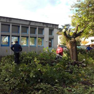 Élagage des arbres de la cour de récréation